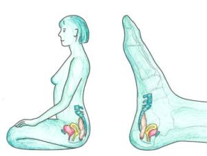 Fußreflezonen-Modell